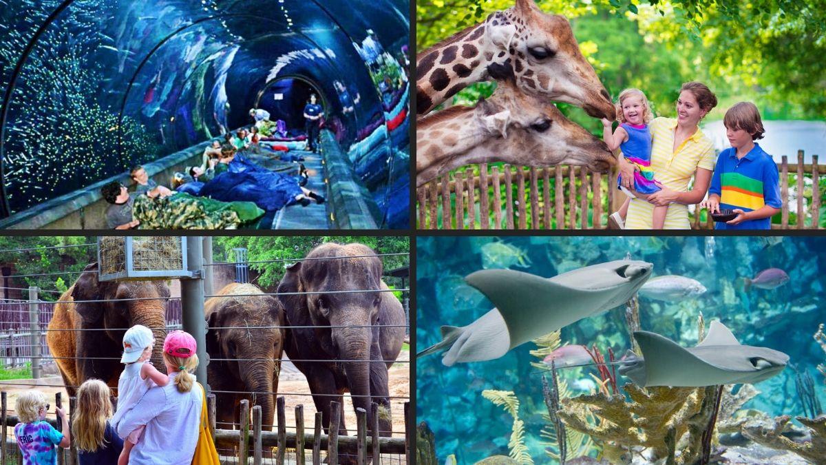 Virtual Tours Of World Class Zoos & Aquariums